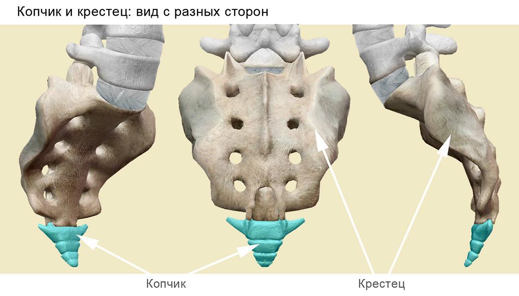Анатомия нижних отделов позвоночника
