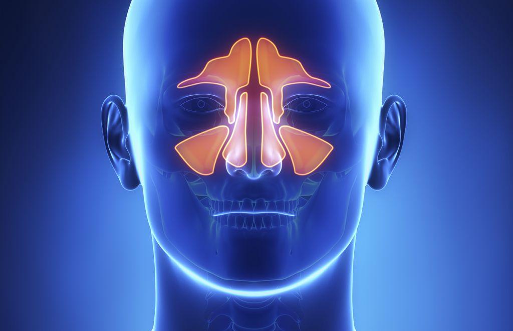Расположение пазух носа