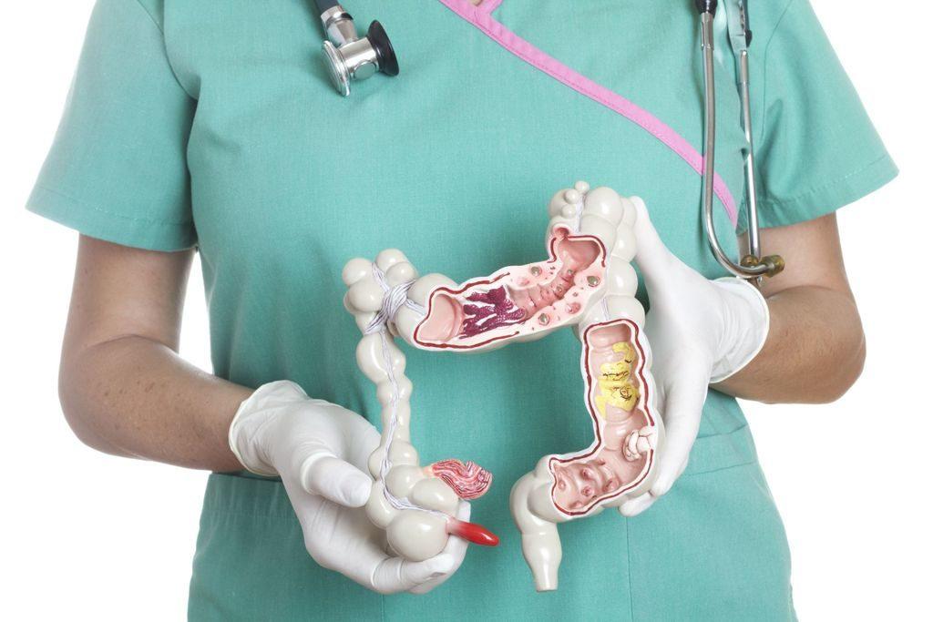 Макет толстого кишечника человека