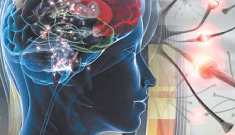 Активность головного мозга