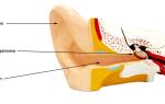 Зачем проходить ультразвуковое обследование уха