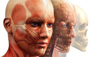 Подробный обзор томографического обследования мягких тканей лица
