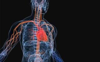 Диагностическая ценность магнитно-резонансной ангиографии