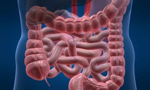 Обследование желудочно-кишечного тракта методами МРТ и КТ