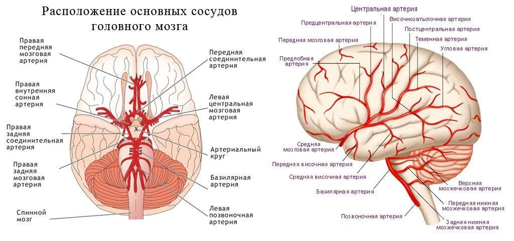 МРТ головного мозга с контрастированием