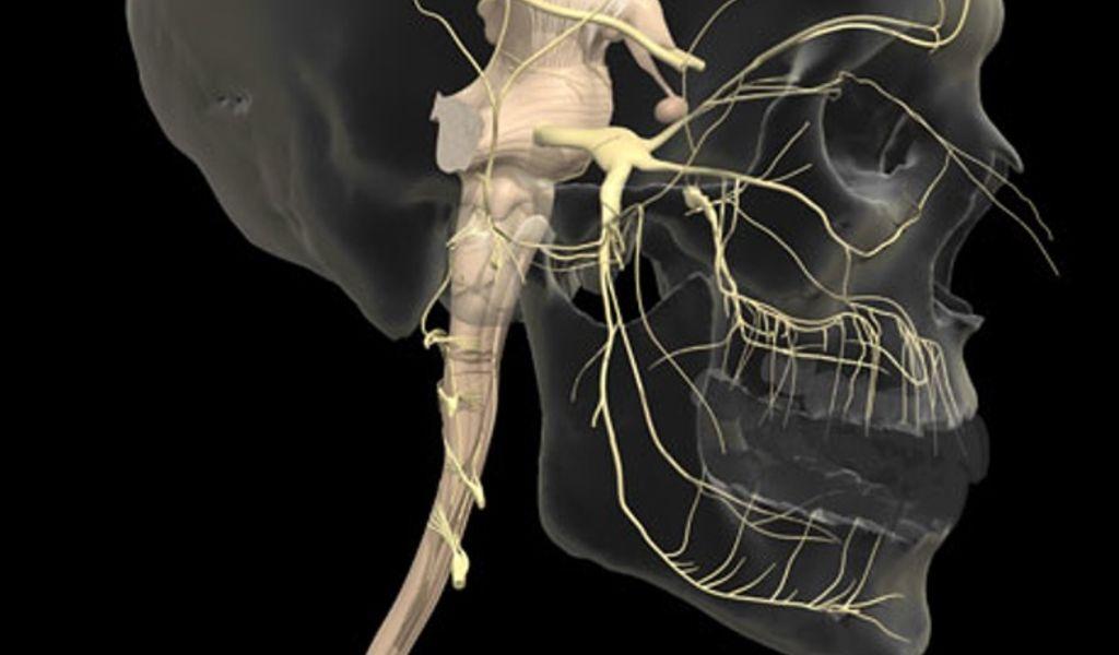 Положение тройничного нерва